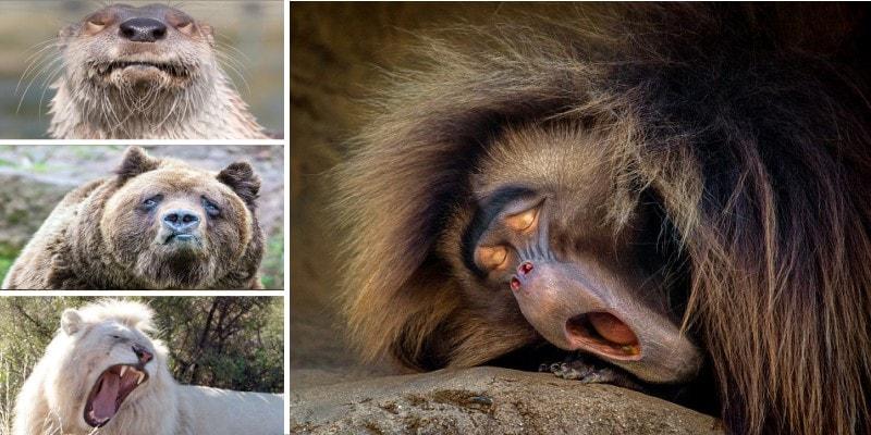 Эмоции животных: спросонья