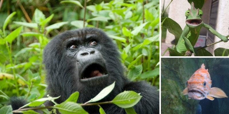 Эмоции животных: удивление и любопытство