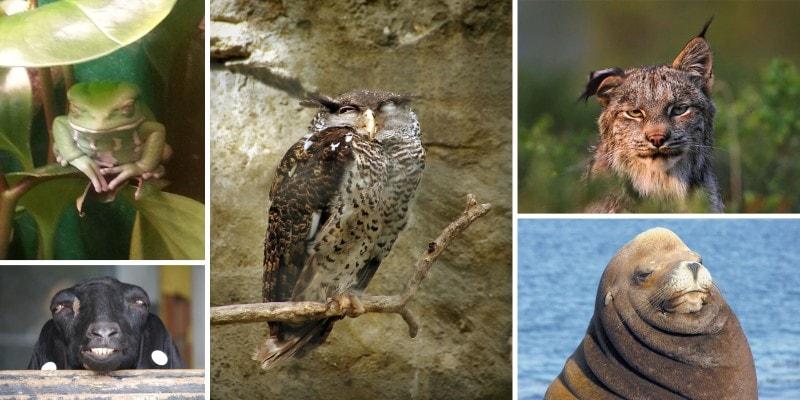 Эмоции животных: пофигизм или полное спокойствие