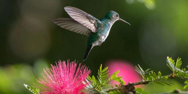 Как правильно фотографировать колибри в полете