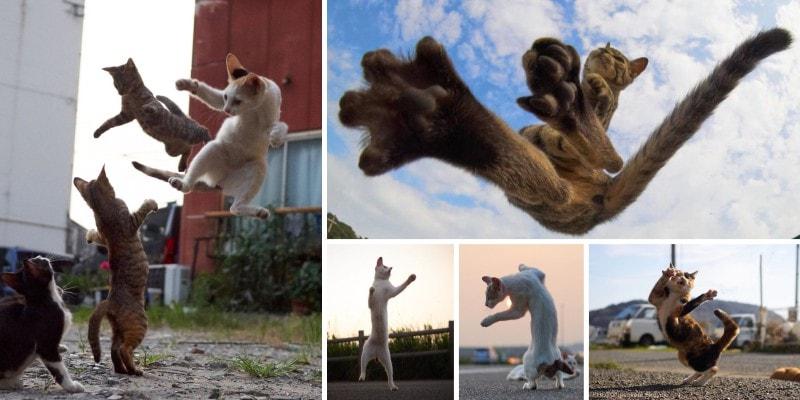 Кунг Фу Кот или боевые практики кошачьих