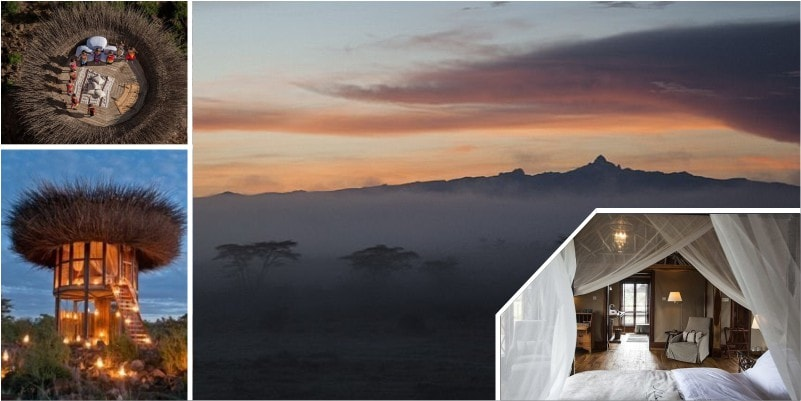 Номер в виде гнезда посреди африканского сафари