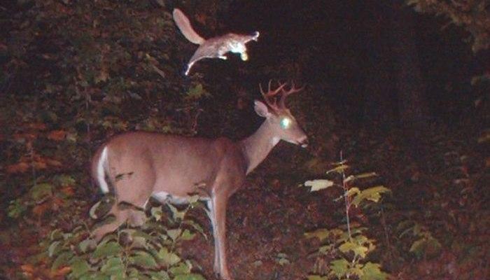 Фото скрытой камерой в лесу