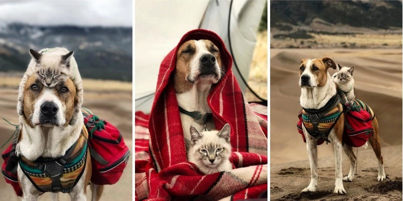 фотографии друзей: котика и собаки