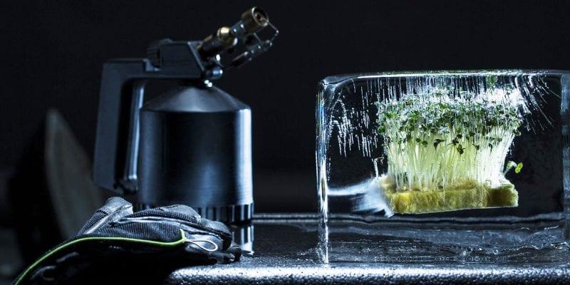 еда в кубиках льда