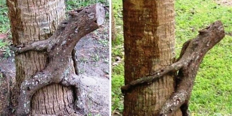 Скульптуры от природы - уникальные деревья
