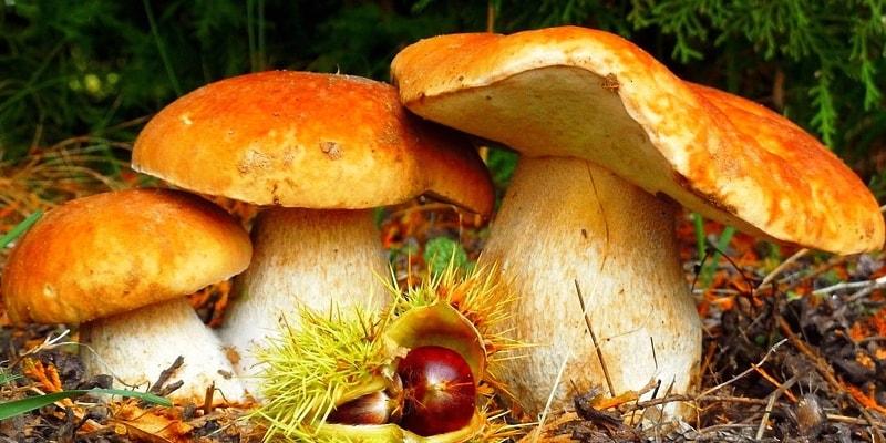 тест: Отличишь ли ты съедобные грибы от ядовитых?