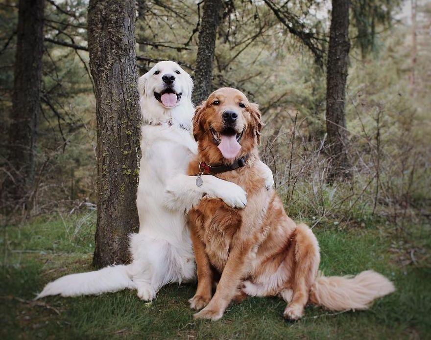 фото собаки пара фото котельное
