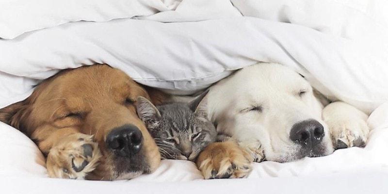 фото как кот дружит с собаками