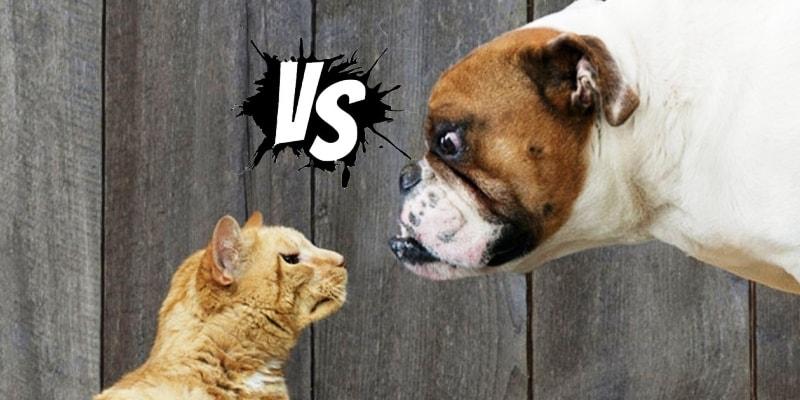 иллюстрации разницы кошки и собаки
