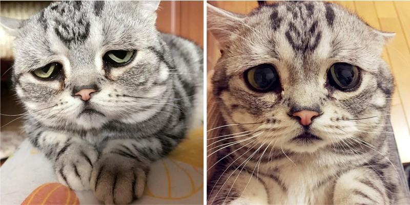 фото печального кота