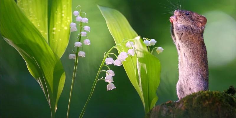 фотографии диких лесных мышей