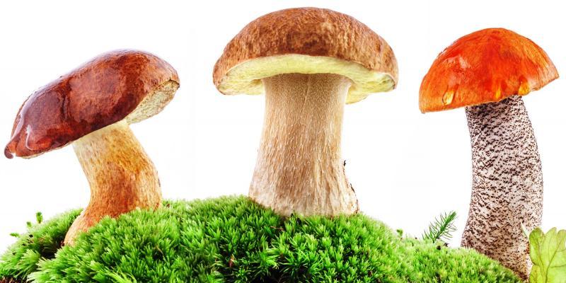 тест по грибам