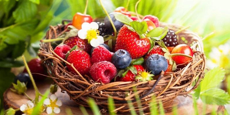 тест по лесным ягодам