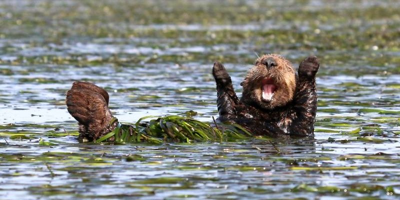 смешные фотографии диких животный