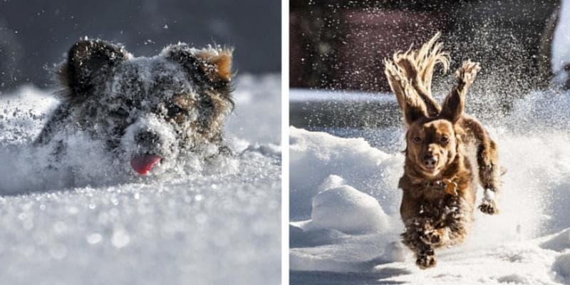 смешные фотографии собак зимой